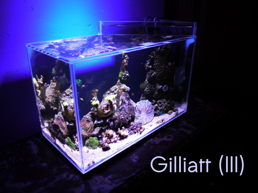 gilliatt III titre small